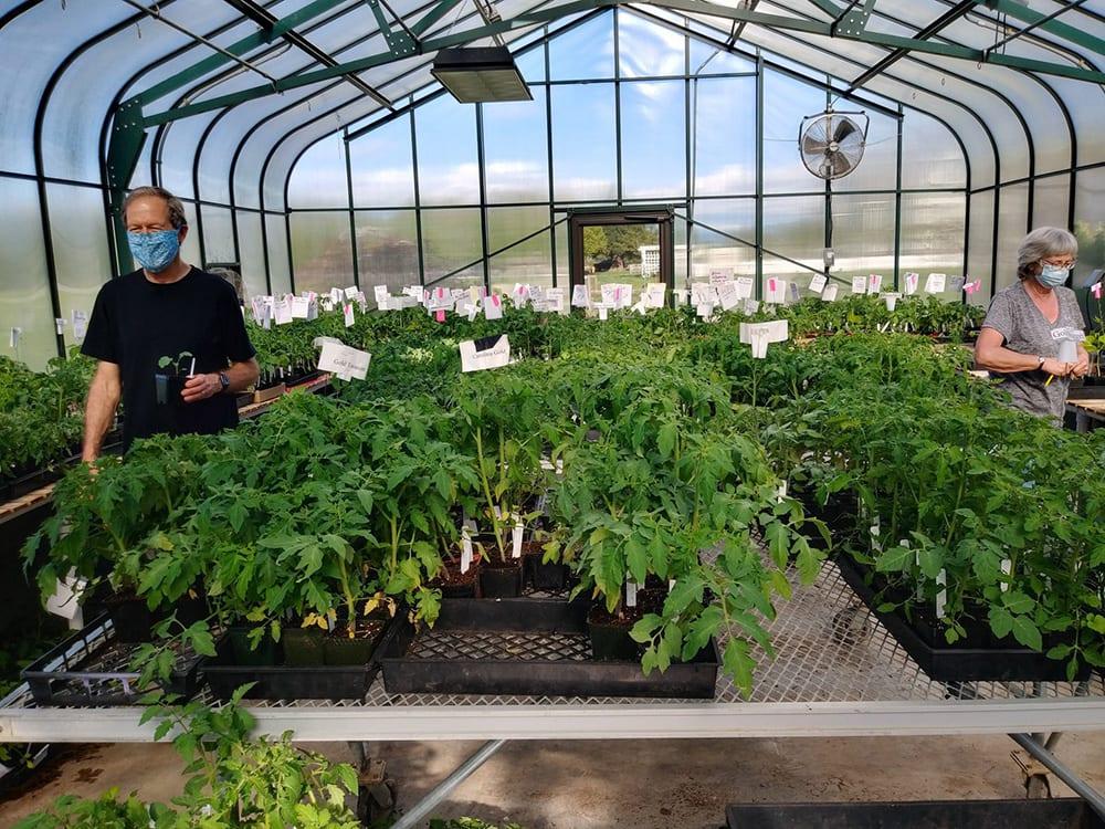 2020 Plant Sale Greenhouse Whatcom Master Gardeners