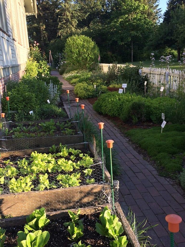 Whatcom Master Gardener Kitchen Garden