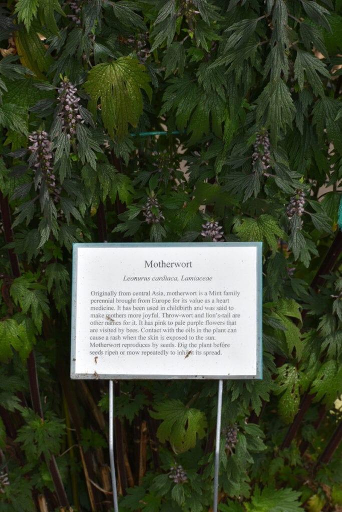 Modern Culinary Herb Garden