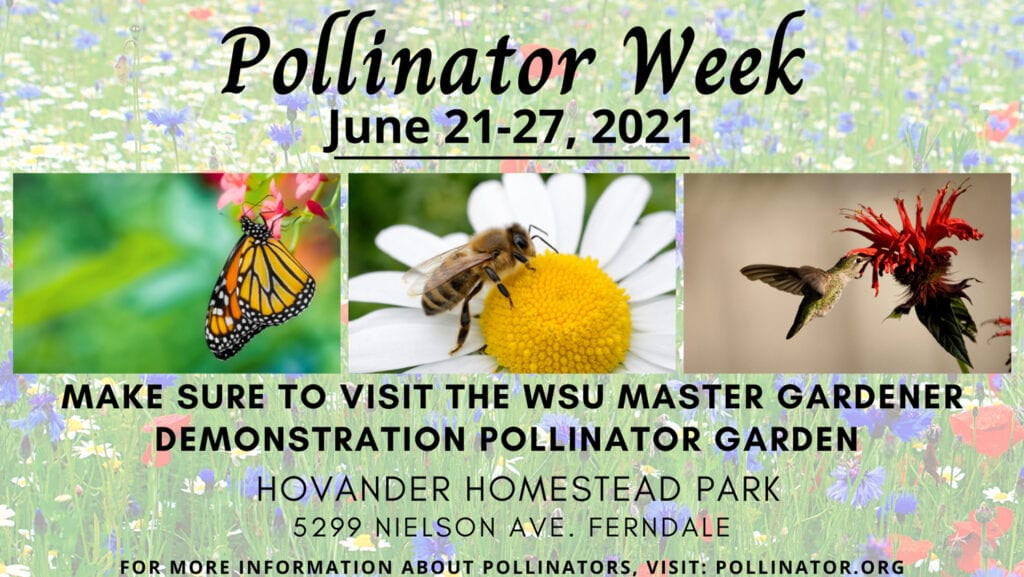 Pollinator1 Week Fb Banner 2
